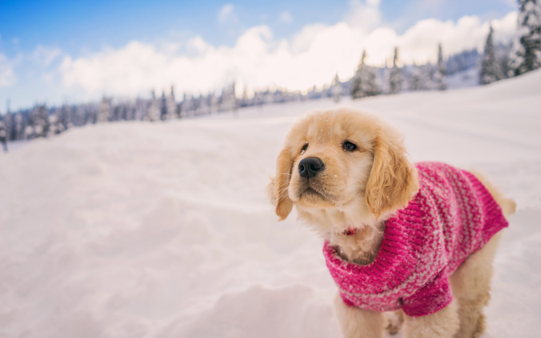 Snow way, Spot! How to keep your furry friends safe this season