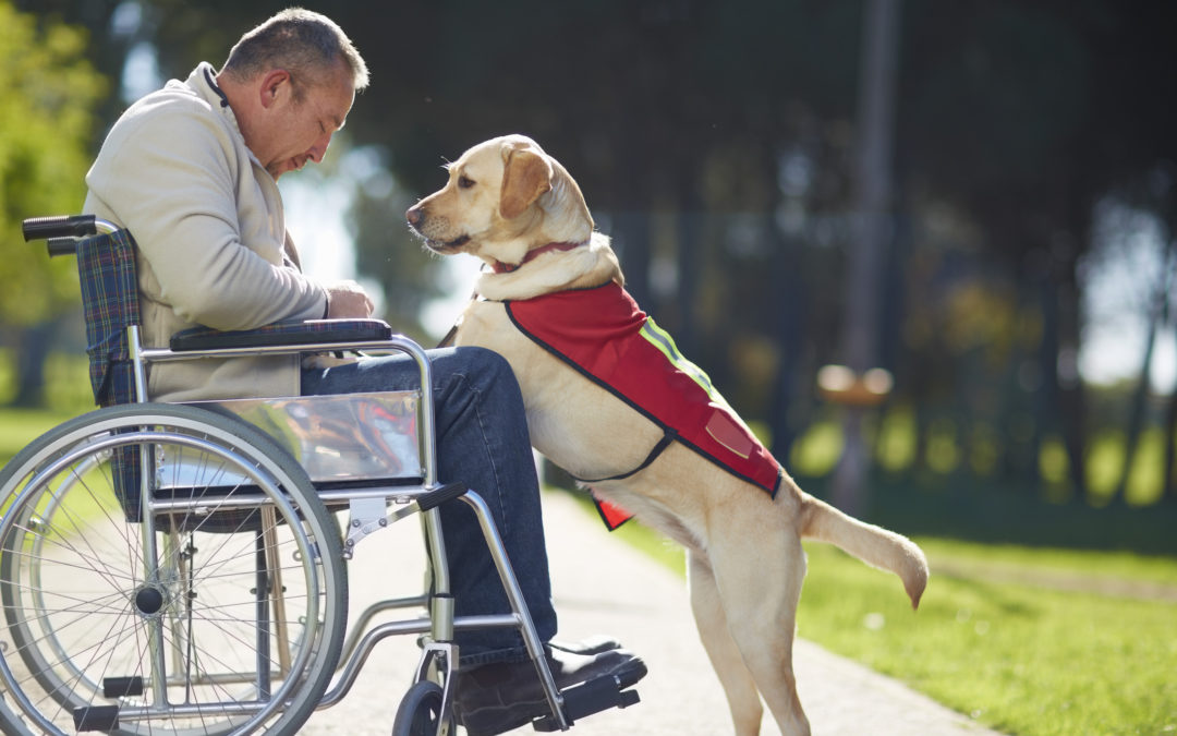 Reasonable requests: Regulating assistance animals in community associations